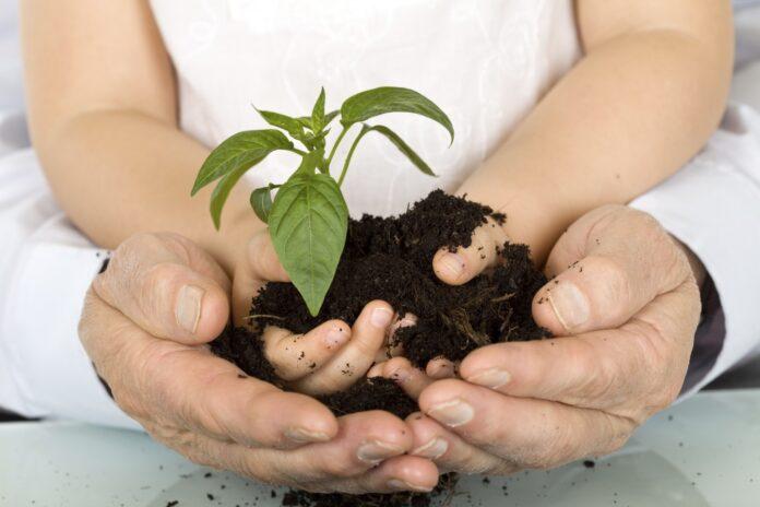 Триває місячник озеленення, прибирання та благоустрою