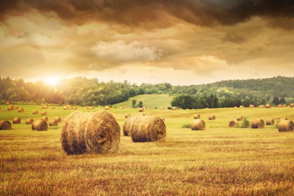 Професійне навчання за професією «Фермер»